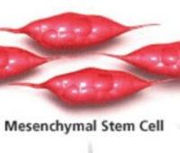 Application of Mesenchymal Stem Cells for the Treatment of Traumatic Brain Injury and Neurodegenerative Diseases