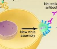 Stem Cell Engineering Developments and Advances in Providing HIV Immunity